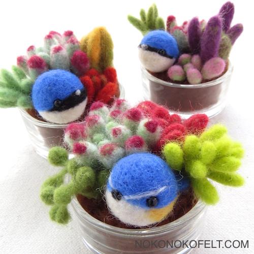 日本三大青い鳥 おおるり こるり るりびたき 多肉植物